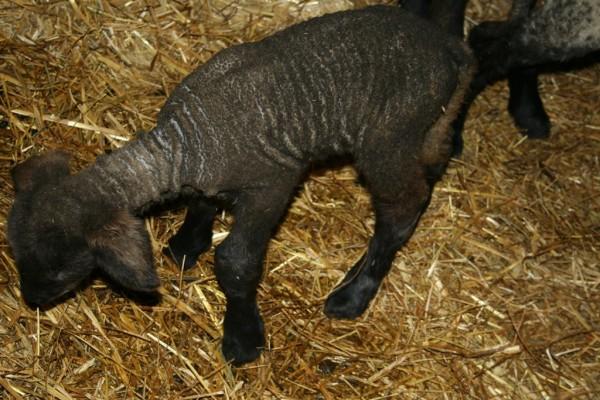 Falkena's on the farm 014